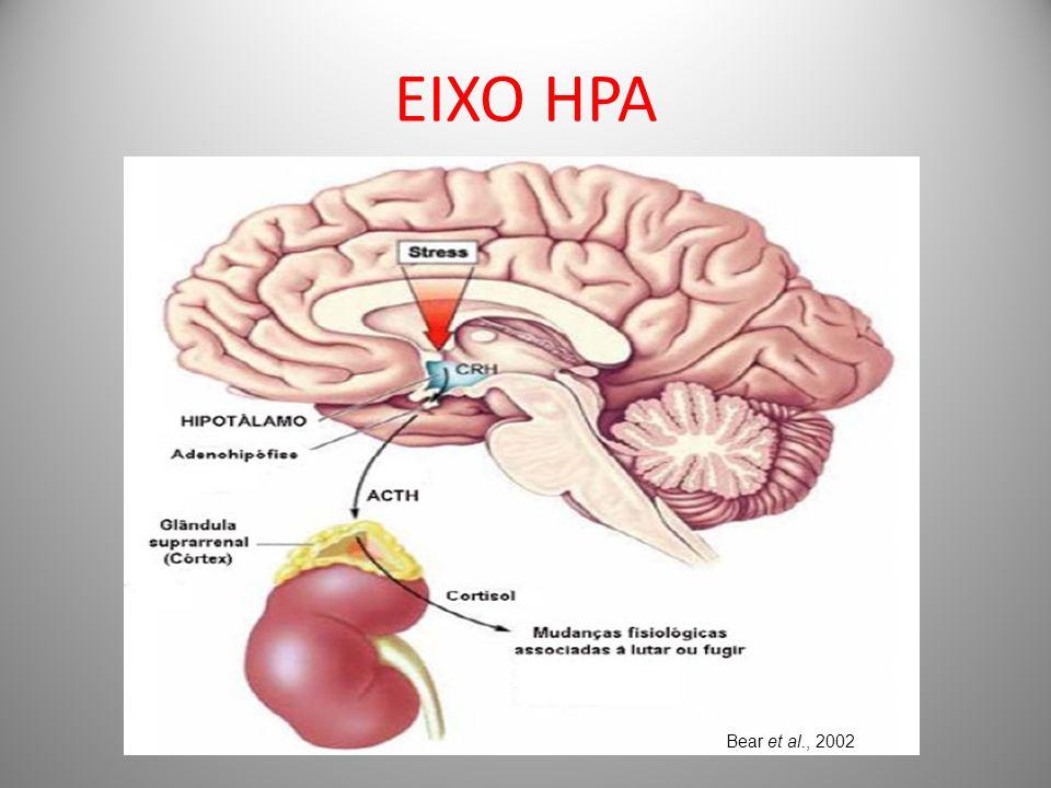 EIXO HPA Bear et al., 2002