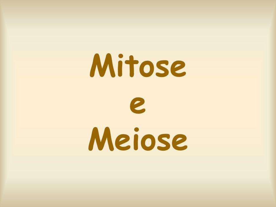 O ciclo celular Dividido em: -Intérfase -Divisão Celular 1.Mitose 2.Meiose