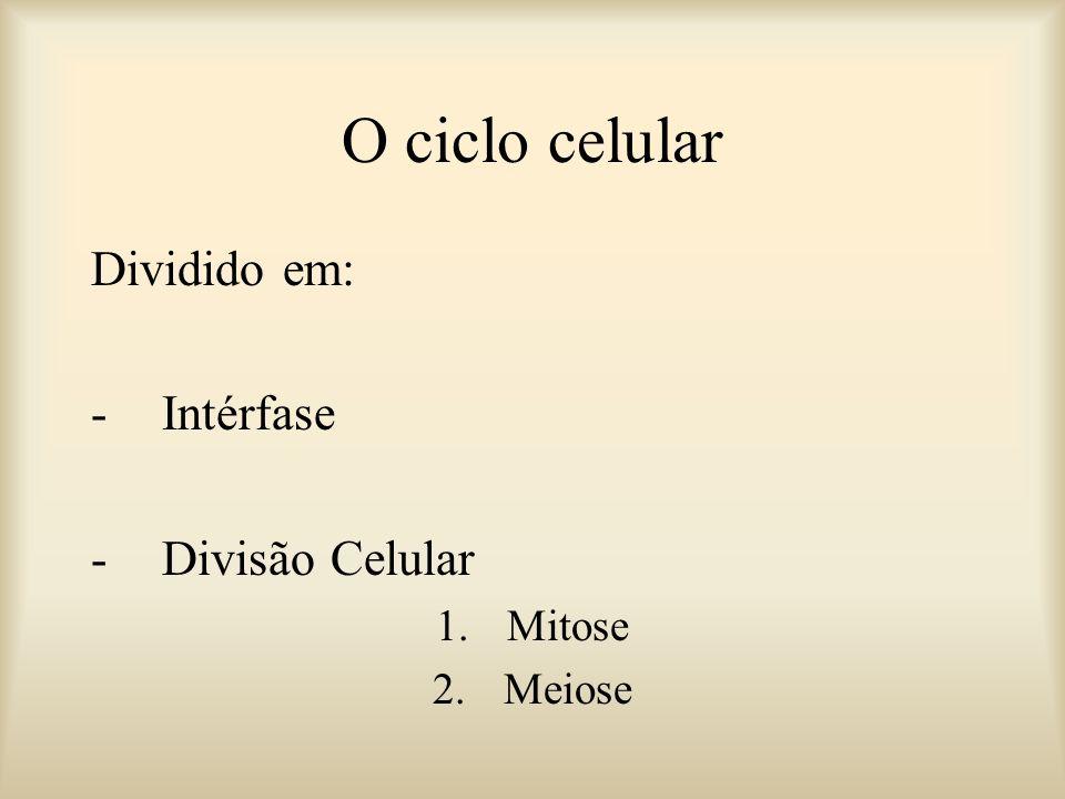 Divisão Celular Intérfase O Ciclo Celular