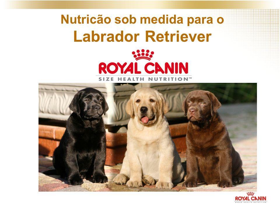 Nutricão sob medida para o Labrador Retriever