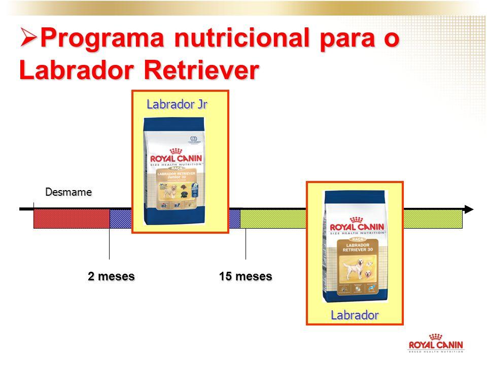 Desmame 2 meses 15 meses Programa nutricional para o Labrador Retriever Programa nutricional para o Labrador Retriever Labrador Jr Labrador