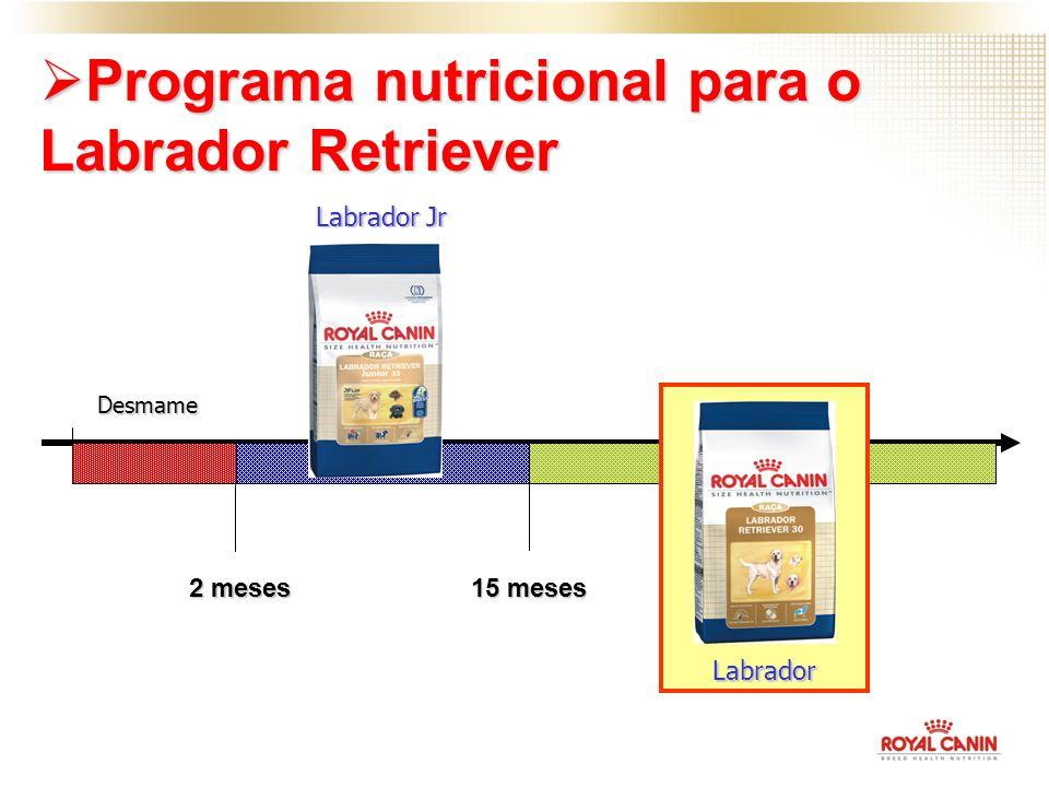 Desmame 2 meses 15 meses Labrador Jr Labrador Programa nutricional para o Labrador Retriever Programa nutricional para o Labrador Retriever