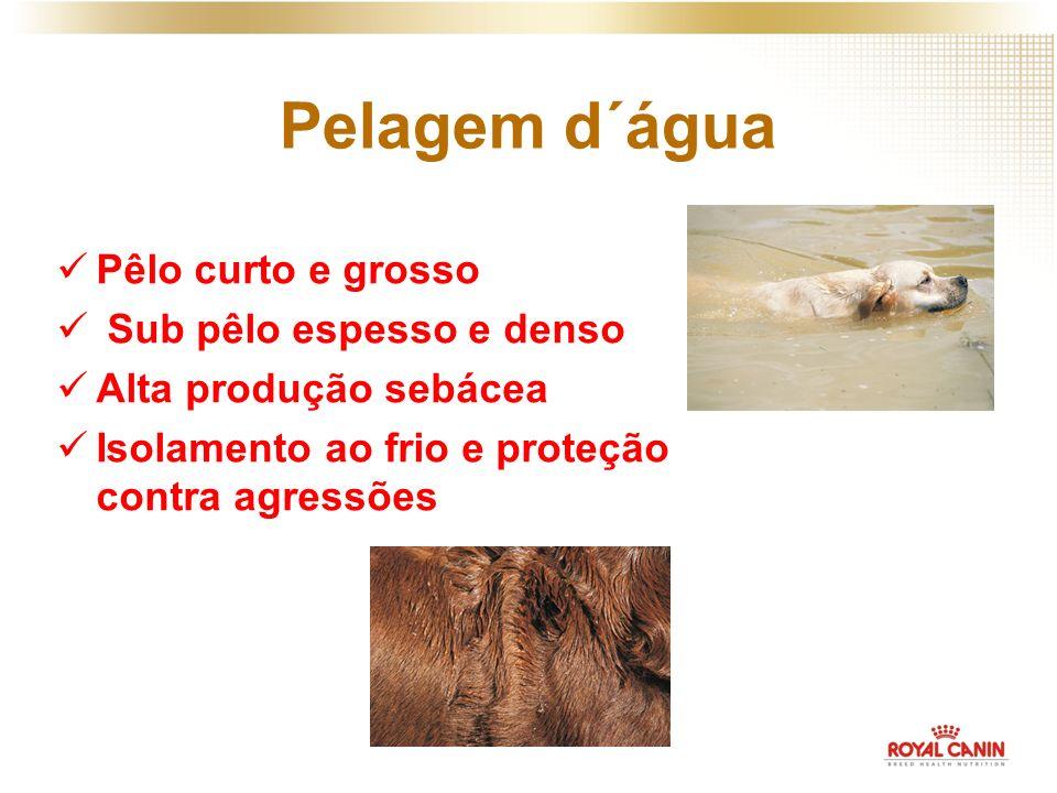 Pelagem d´água Pêlo curto e grosso Sub pêlo espesso e denso Alta produção sebácea Isolamento ao frio e proteção contra agressões