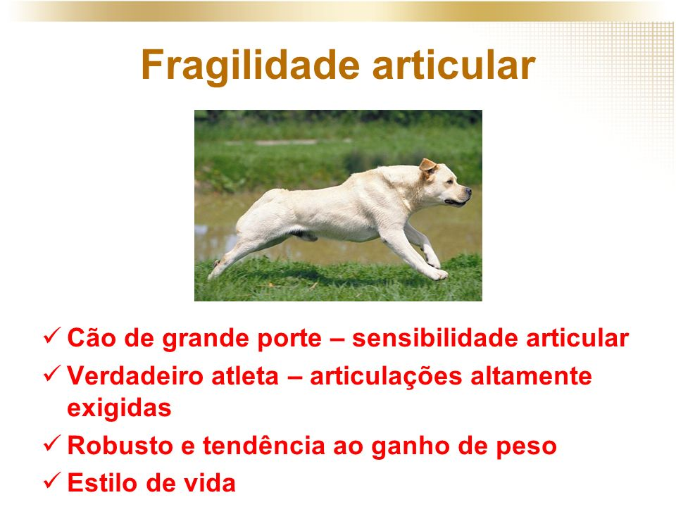 Fragilidade articular Cão de grande porte – sensibilidade articular Verdadeiro atleta – articulações altamente exigidas Robusto e tendência ao ganho d