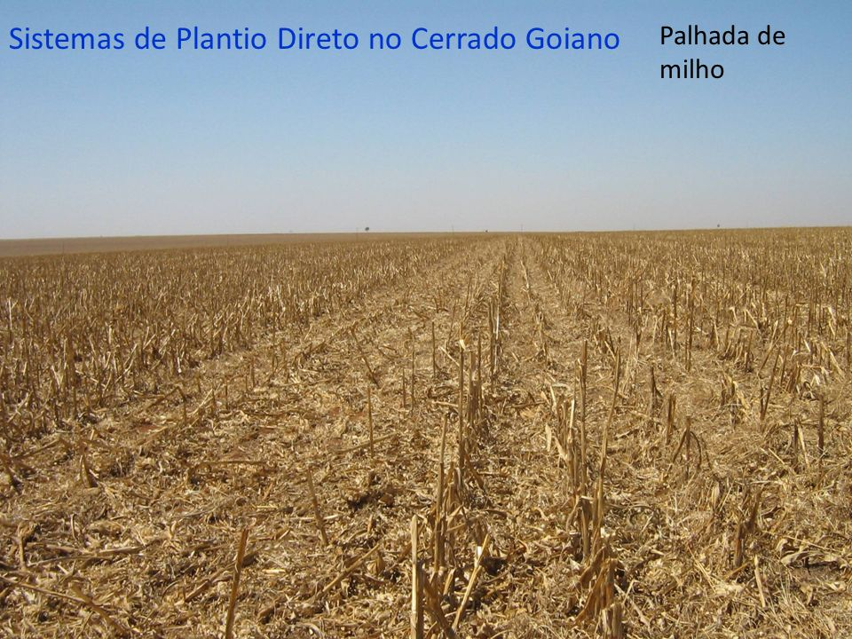 Palhada de milho Sistemas de Plantio Direto no Cerrado Goiano