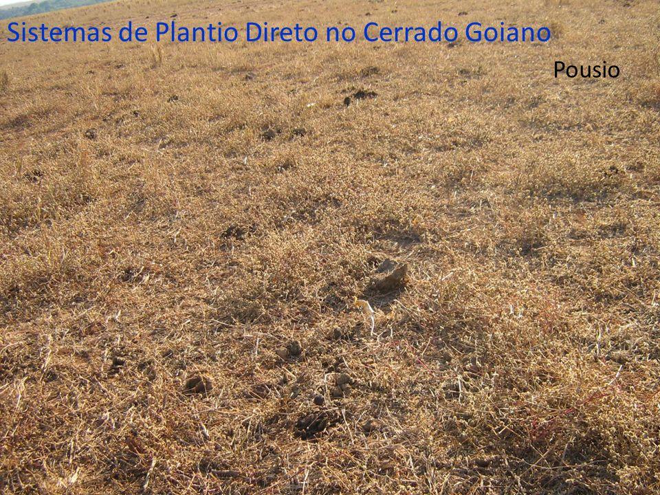 Pousio Sistemas de Plantio Direto no Cerrado Goiano