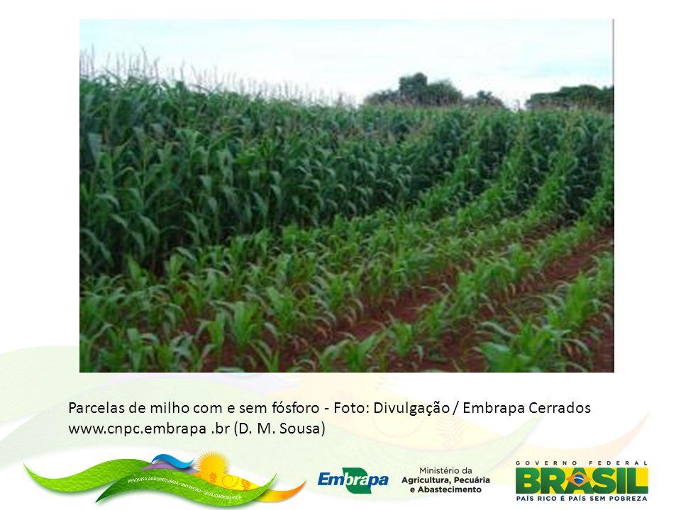 Parcelas de milho com e sem fósforo - Foto: Divulgação / Embrapa Cerrados www.cnpc.embrapa.br (D. M. Sousa)