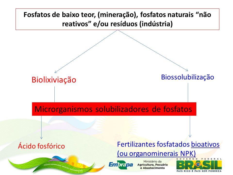 Fosfatos de baixo teor, (mineração), fosfatos naturais não reativos e/ou resíduos (indústria) Biolixiviação Fertilizantes fosfatados bioativos (ou org