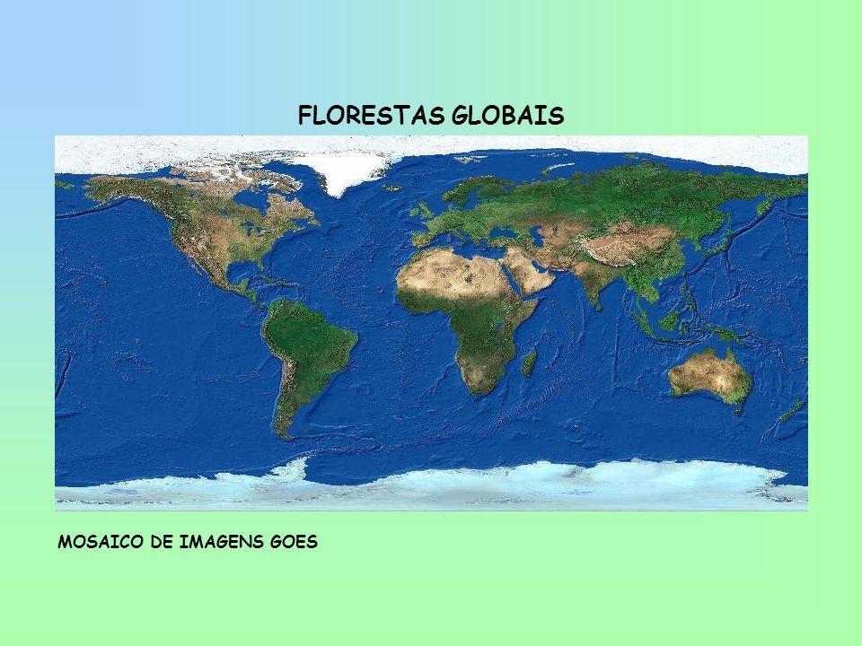 FLORESTAS GLOBAIS