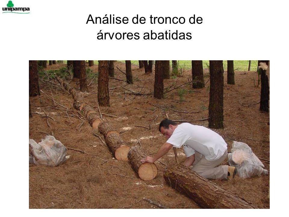 Análise de tronco de árvores abatidas