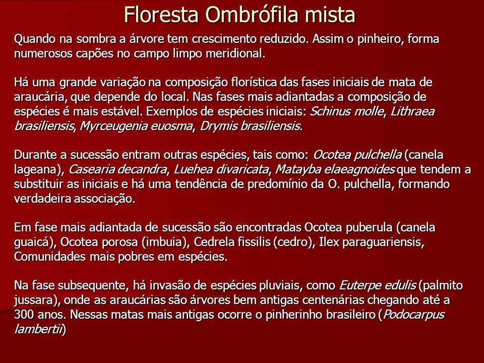 Floresta Ombrófila Mista Aluvial Ocorre nas margem dos rios com dominância de Araucaria angustifolia, Podocarpus lambertii e Drymis brasiliensis, nas áreas de maior altitude.