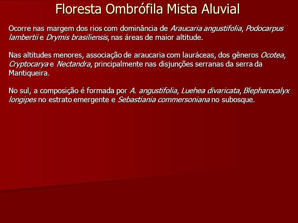 Floresta Ombrófila Mista Aluvial Ocorre nas margem dos rios com dominância de Araucaria angustifolia, Podocarpus lambertii e Drymis brasiliensis, nas
