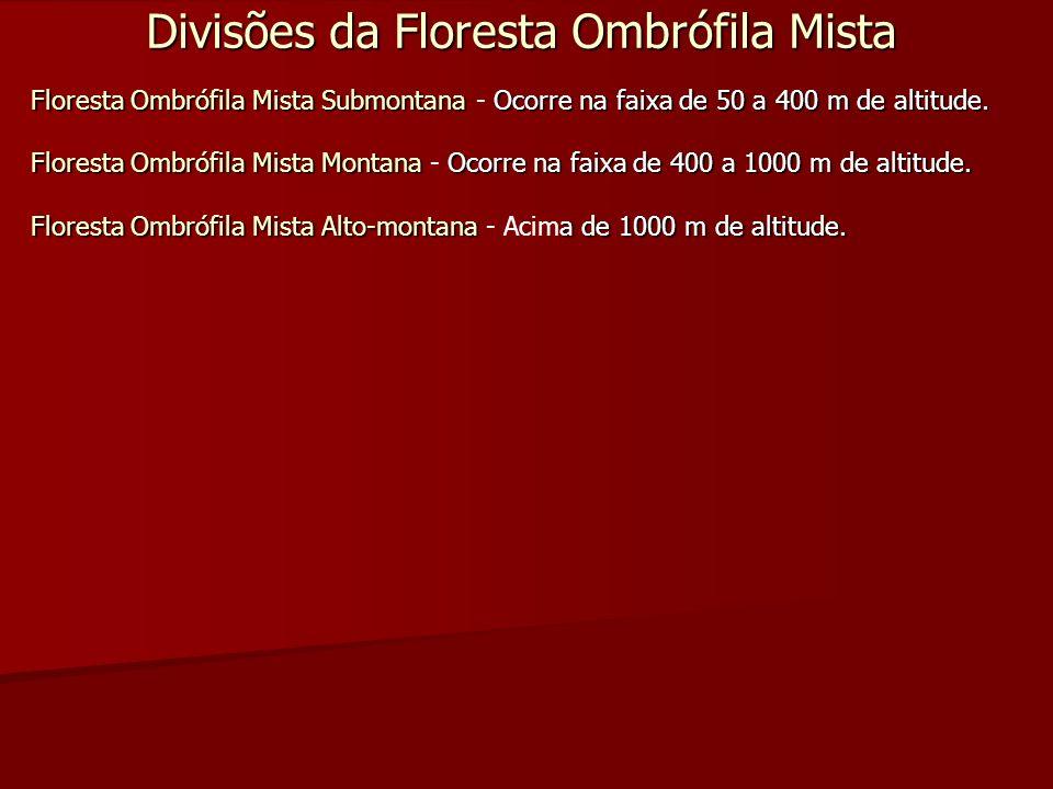 Divisões da Floresta Ombrófila Mista Floresta Ombrófila Mista SubmontanaOcorre na faixa de 50 a 400 m de altitude. Floresta Ombrófila Mista Submontana