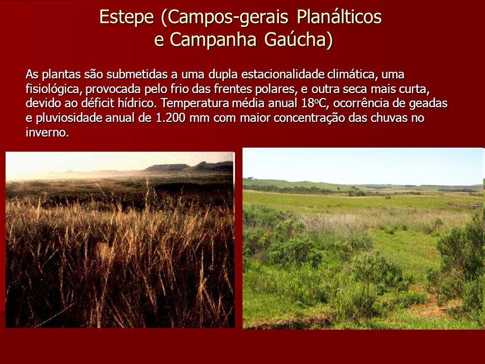Estepe (Campos-gerais Planálticos e Campanha Gaúcha) As plantas são submetidas a uma dupla estacionalidade climática, uma fisiológica, provocada pelo