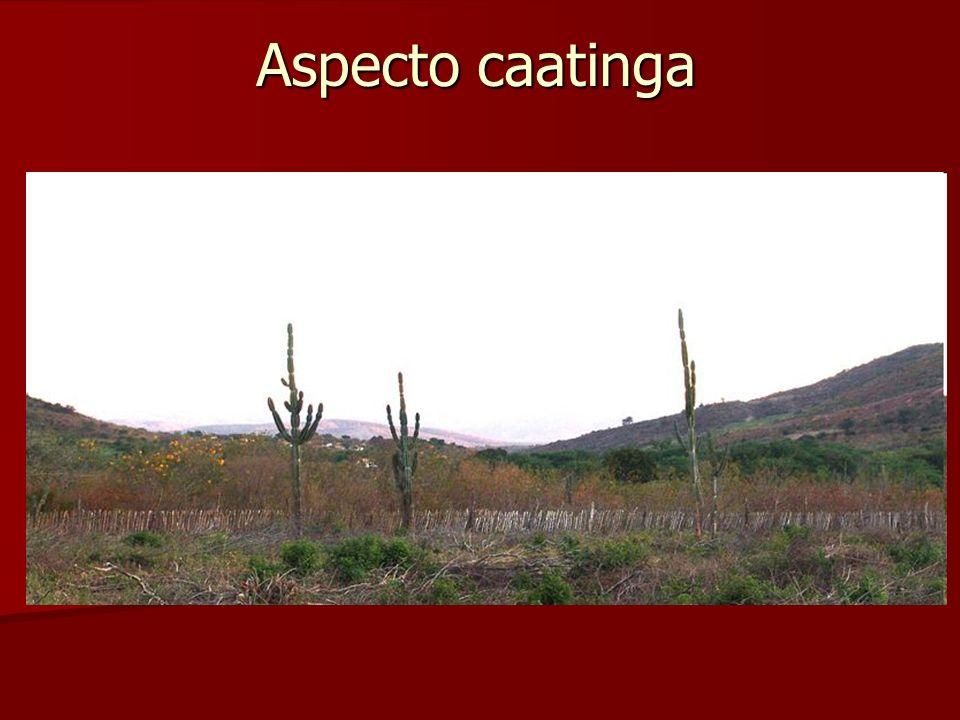Aspecto caatinga