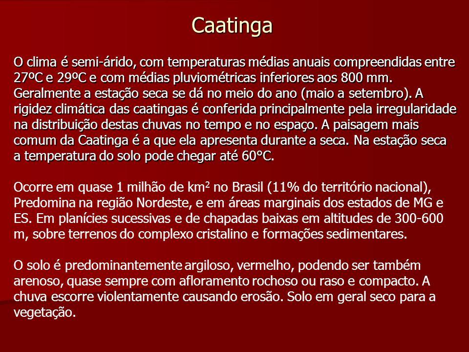 Caatinga O clima é semi-árido, com temperaturas médias anuais compreendidas entre 27ºC e 29ºC e com médias pluviométricas inferiores aos 800 mm. Geral