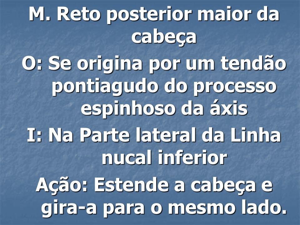 M.Reto posterior menor da cabeça O: Tubérculo posterior da atlas.