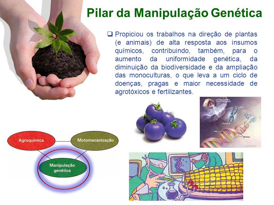 Pilar da Manipulação Genética Propiciou os trabalhos na direção de plantas (e animais) de alta resposta aos insumos químicos, contribuindo, também, pa