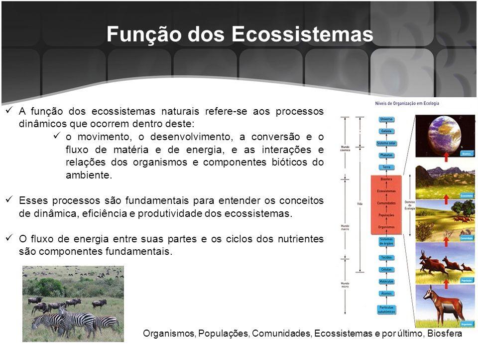 Fluxo de Energia em Ecossistemas Os organismos necessitam de energia para desenvolver-se e executar seus processos fisiológicos.