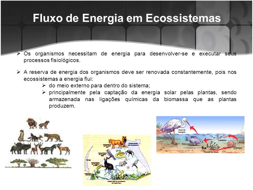 Fluxo de Energia em Ecossistemas Por meio da cadeia trófica, a energia muda continuamente de forma, e passa de um componente para outro.