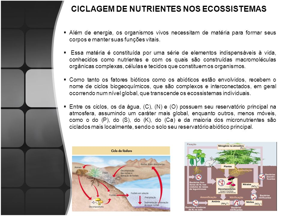 CICLAGEM DE NUTRIENTES NOS ECOSSISTEMAS Além de energia, os organismos vivos necessitam de matéria para formar seus corpos e manter suas funções vitais.
