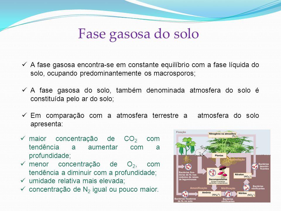 Fase gasosa do solo A fase gasosa encontra-se em constante equilíbrio com a fase líquida do solo, ocupando predominantemente os macrosporos; A fase ga