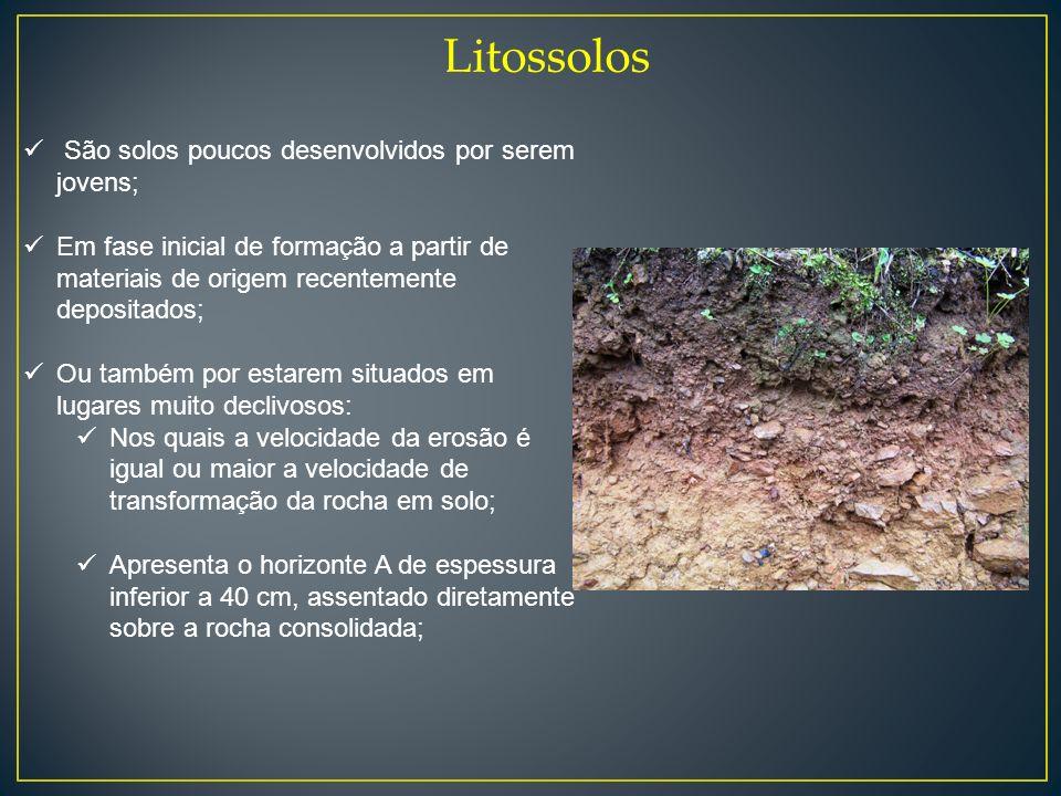 Litossolos São solos poucos desenvolvidos por serem jovens; Em fase inicial de formação a partir de materiais de origem recentemente depositados; Ou t