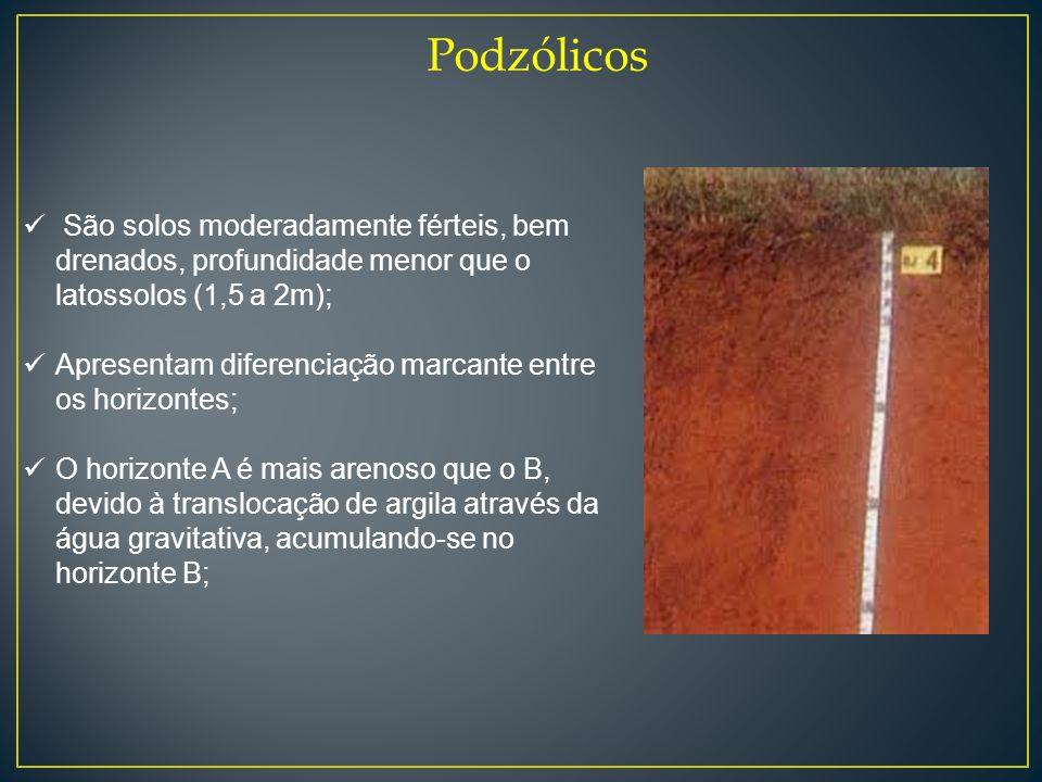 Podzólicos São solos moderadamente férteis, bem drenados, profundidade menor que o latossolos (1,5 a 2m); Apresentam diferenciação marcante entre os h