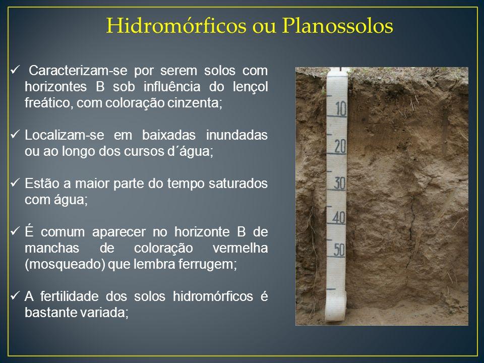 Hidromórficos ou Planossolos Caracterizam-se por serem solos com horizontes B sob influência do lençol freático, com coloração cinzenta; Localizam-se
