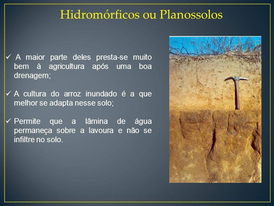 Hidromórficos ou Planossolos A maior parte deles presta-se muito bem à agricultura após uma boa drenagem; A cultura do arroz inundado é a que melhor s