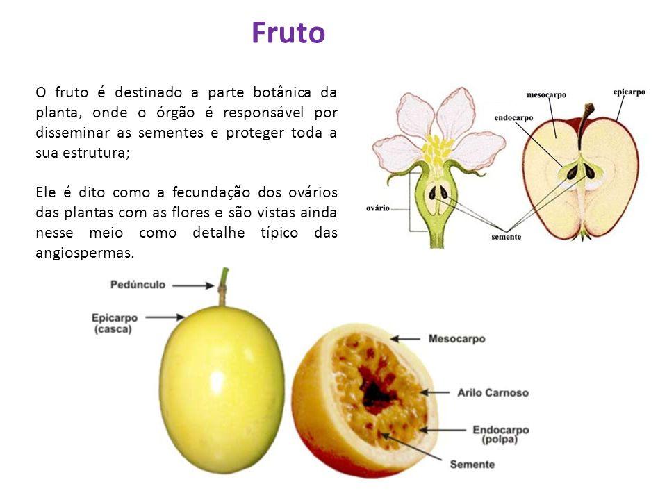 O fruto é destinado a parte botânica da planta, onde o órgão é responsável por disseminar as sementes e proteger toda a sua estrutura; Ele é dito como