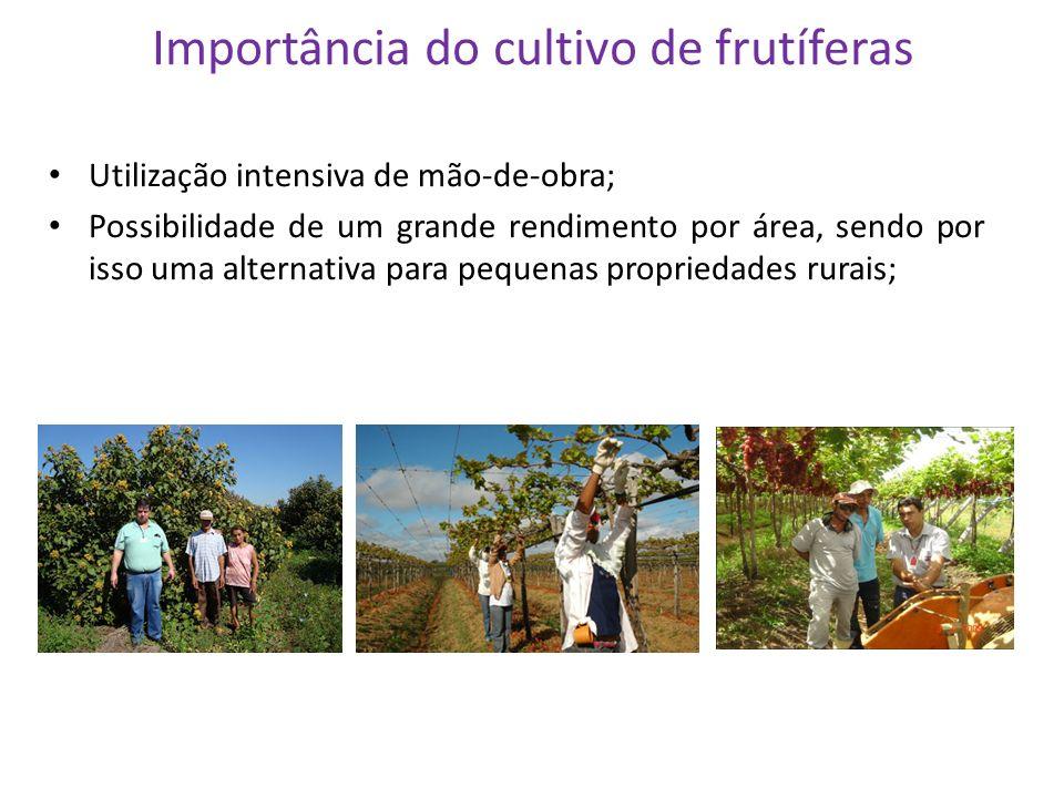 Importância do cultivo de frutíferas Utilização intensiva de mão-de-obra; Possibilidade de um grande rendimento por área, sendo por isso uma alternati