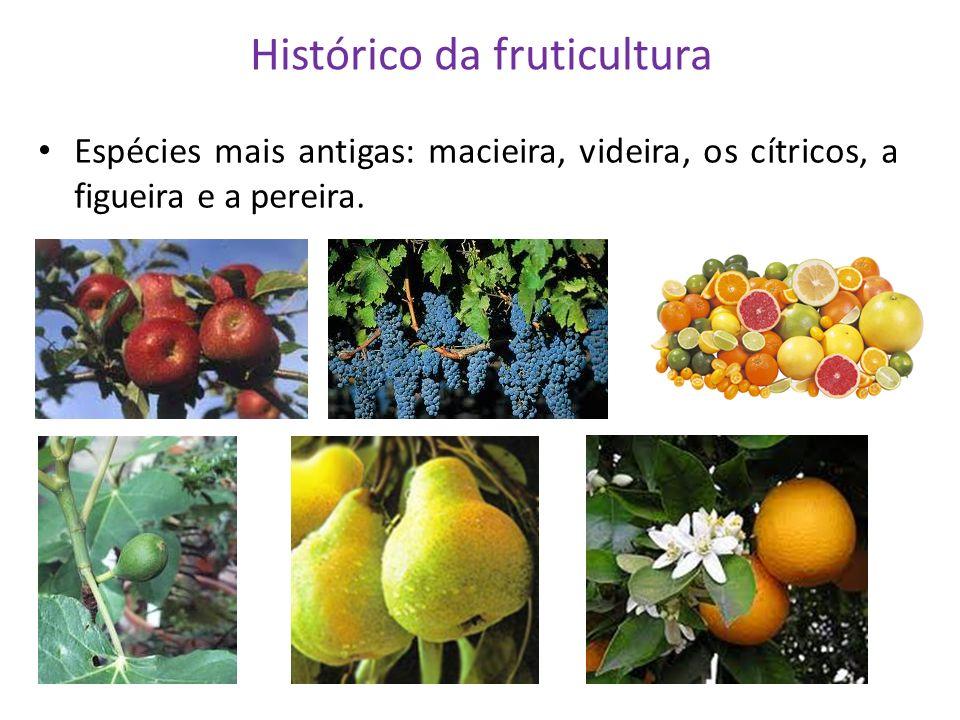 Histórico da fruticultura Espécies mais antigas: macieira, videira, os cítricos, a figueira e a pereira.