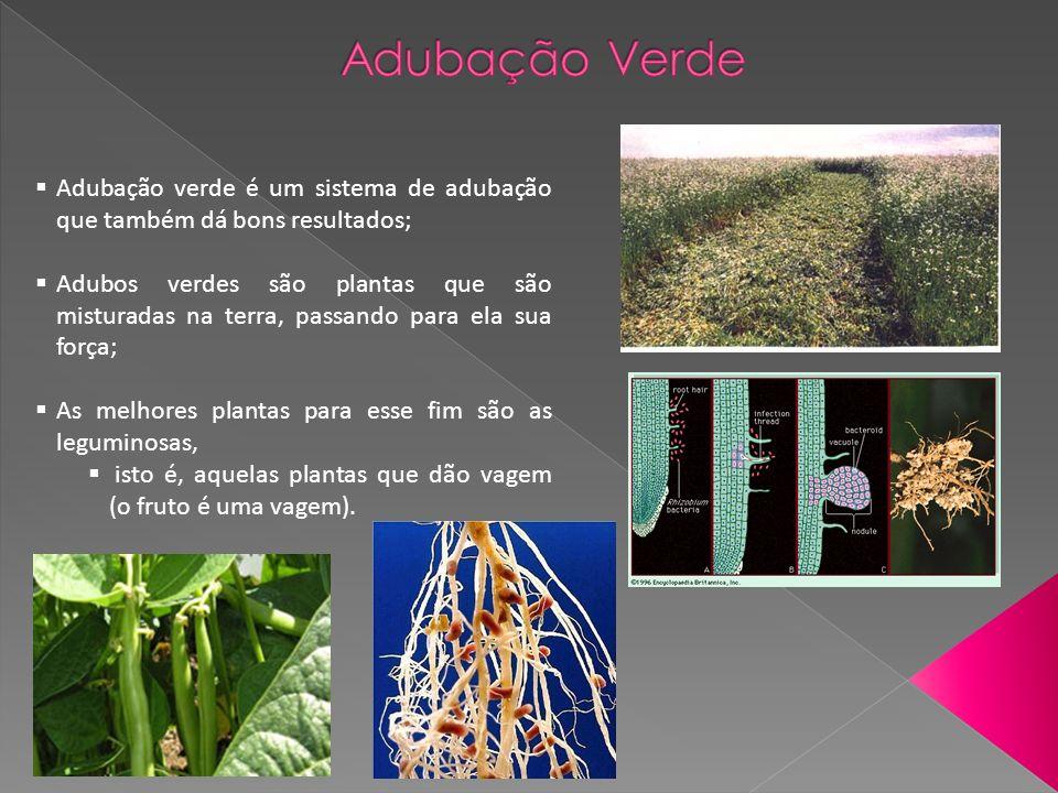 Adubação verde é um sistema de adubação que também dá bons resultados; Adubos verdes são plantas que são misturadas na terra, passando para ela sua força; As melhores plantas para esse fim são as leguminosas, isto é, aquelas plantas que dão vagem (o fruto é uma vagem).