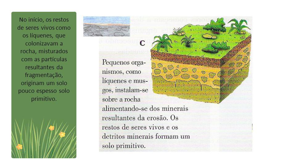 No início, os restos de seres vivos como os líquenes, que colonizavam a rocha, misturados com as partículas resultantes da fragmentação, originam um s