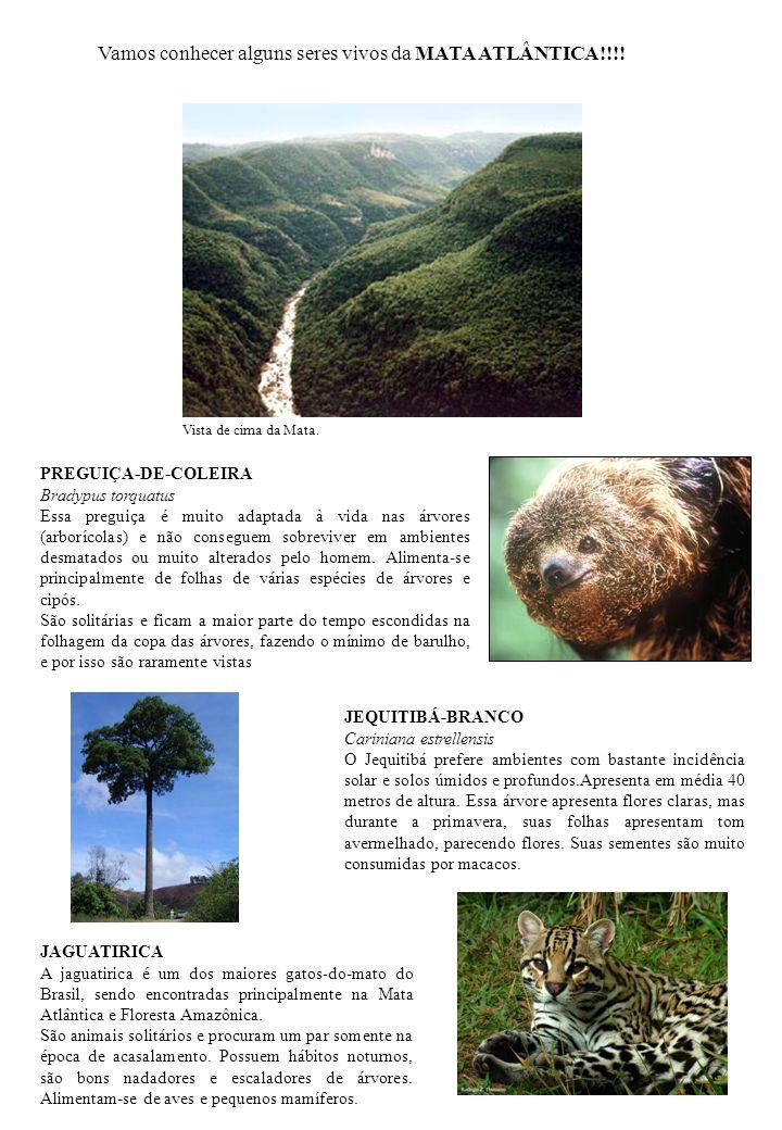 PREGUIÇA-DE-COLEIRA Bradypus torquatus Essa preguiça é muito adaptada à vida nas árvores (arborícolas) e não conseguem sobreviver em ambientes desmata