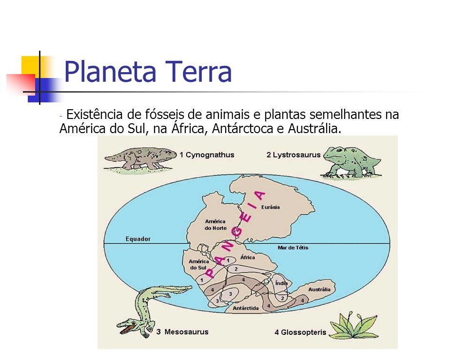 Fontes Consultadas Bibliografia Leiz, Viktor – Geologia Geral Almanaque Abril 89 Sites relacionados http://www.ucmp.berkeley.edu http://www.domingos.home.sapo.pt http://www.aquiferoguarani.hpg.com.br/act01_4.pdf