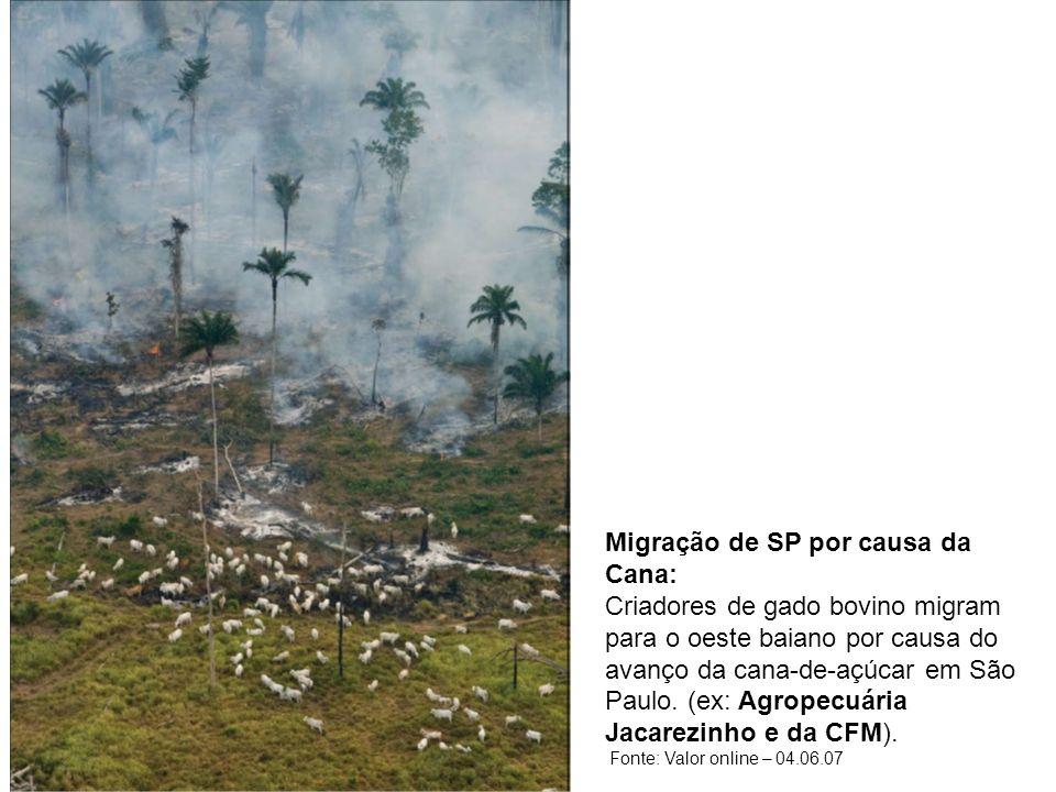 Migração de SP por causa da Cana: Criadores de gado bovino migram para o oeste baiano por causa do avanço da cana-de-açúcar em São Paulo. (ex: Agropec