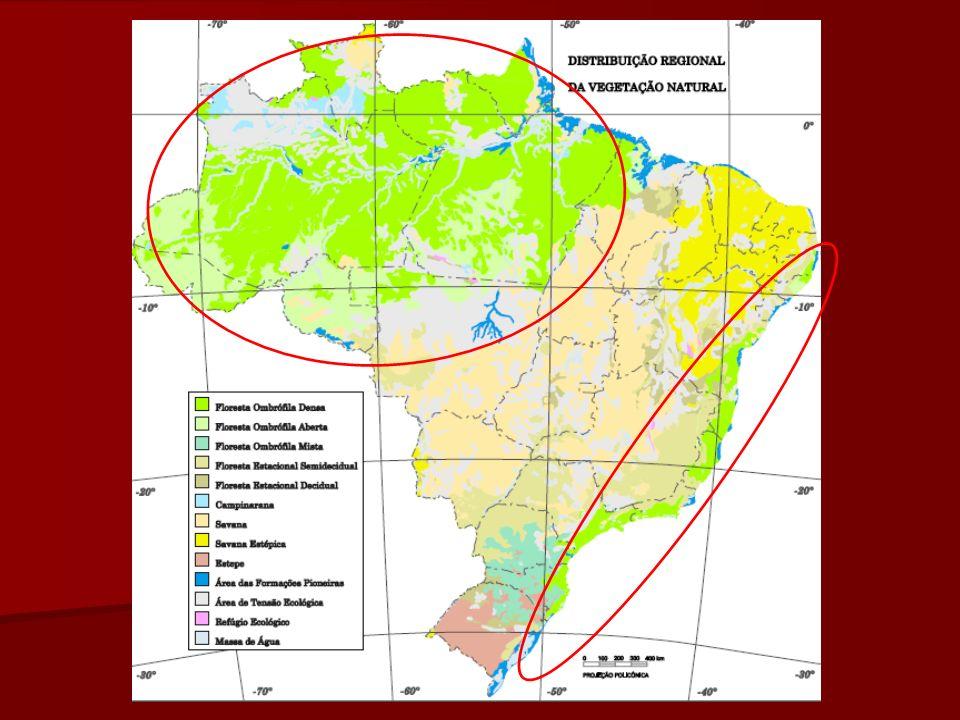 Floresta Amazônica Ocupa cerca de 40% do território brasileiro – em uma área que abrange a totalidade da Região Norte, o norte de Mato Grosso e o oeste do Maranhão –, estendendo-se ainda pelos países vizinhos (Suriname, Guiana, Venezuela, Colômbia, Equador, Peru e Bolívia), além da Guiana Francesa.