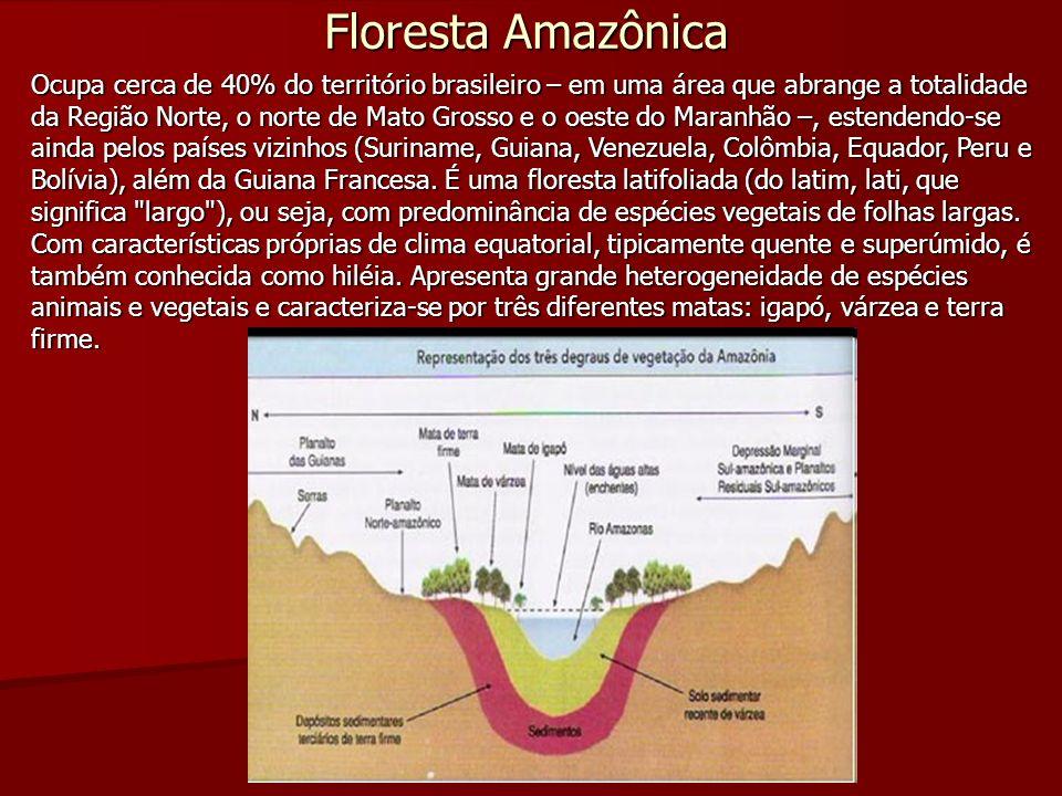 Floresta Amazônica Ocupa cerca de 40% do território brasileiro – em uma área que abrange a totalidade da Região Norte, o norte de Mato Grosso e o oest