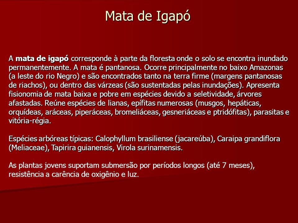 Mata de Igapó A mata de igapó corresponde à parte da floresta onde o solo se encontra inundado permanentemente. A mata é pantanosa. Ocorre principalme