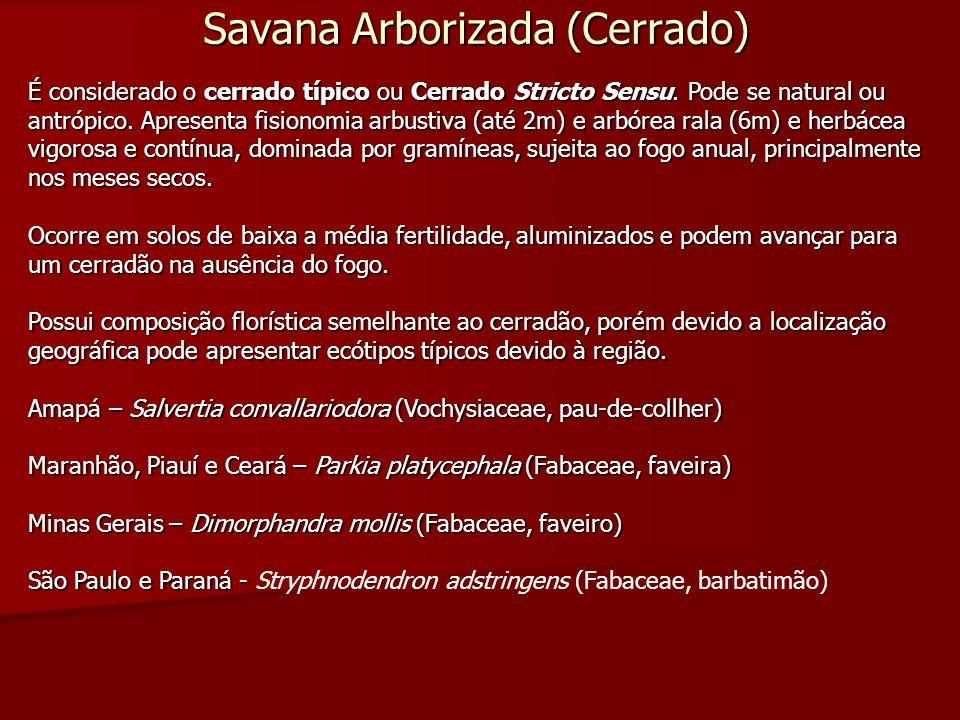 Savana Arborizada (Cerrado) É considerado o cerrado típico ou Cerrado Stricto Sensu. Pode se natural ou antrópico. Apresenta fisionomia arbustiva (até