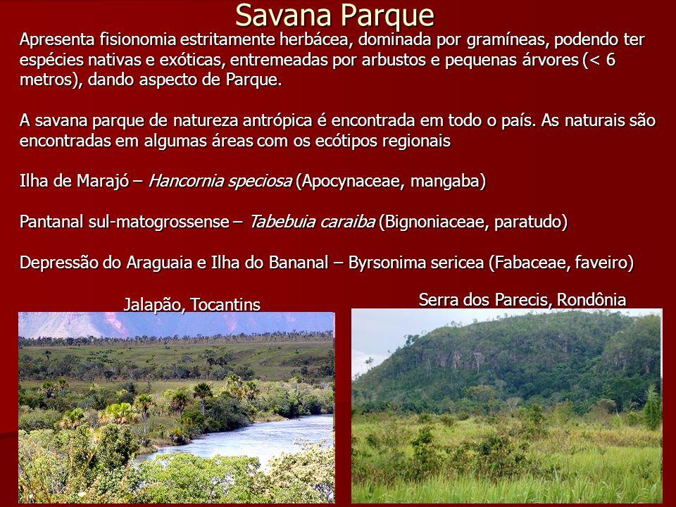 Savana Parque Apresenta fisionomia estritamente herbácea, dominada por gramíneas, podendo ter espécies nativas e exóticas, entremeadas por arbustos e