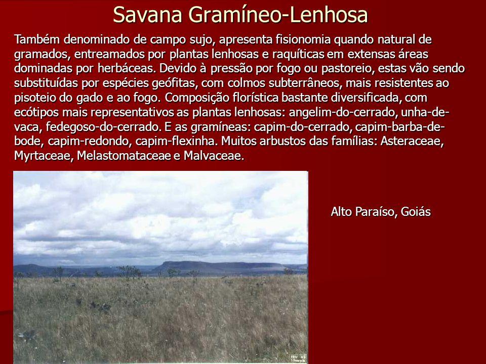 Savana Gramíneo-Lenhosa Também denominado de campo sujo, apresenta fisionomia quando natural de gramados, entreamados por plantas lenhosas e raquítica