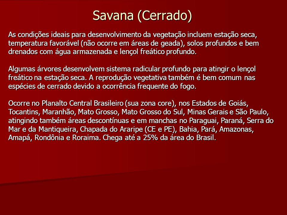 Savana (Cerrado) As condições ideais para desenvolvimento da vegetação incluem estação seca, temperatura favorável (não ocorre em áreas de geada), sol