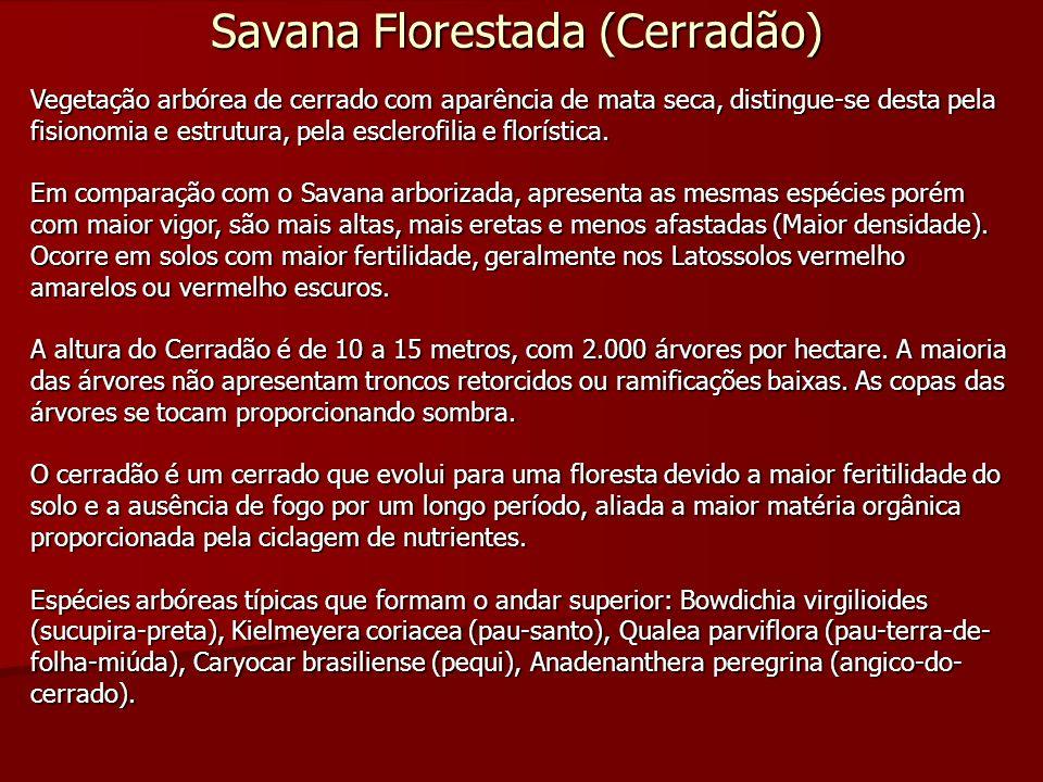 Savana Florestada (Cerradão) Vegetação arbórea de cerrado com aparência de mata seca, distingue-se desta pela fisionomia e estrutura, pela esclerofili