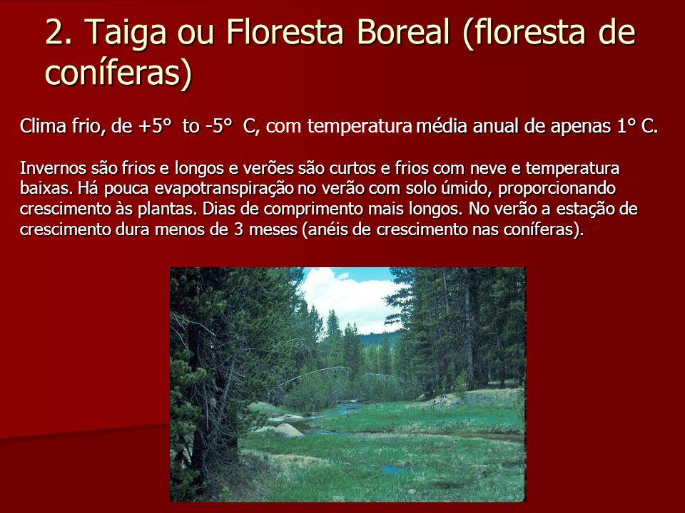 2. Taiga ou Floresta Boreal (floresta de coníferas) Clima frio, de +5° to -5° Cmédia anual de apenas 1° C. Clima frio, de +5° to -5° C, com temperatur