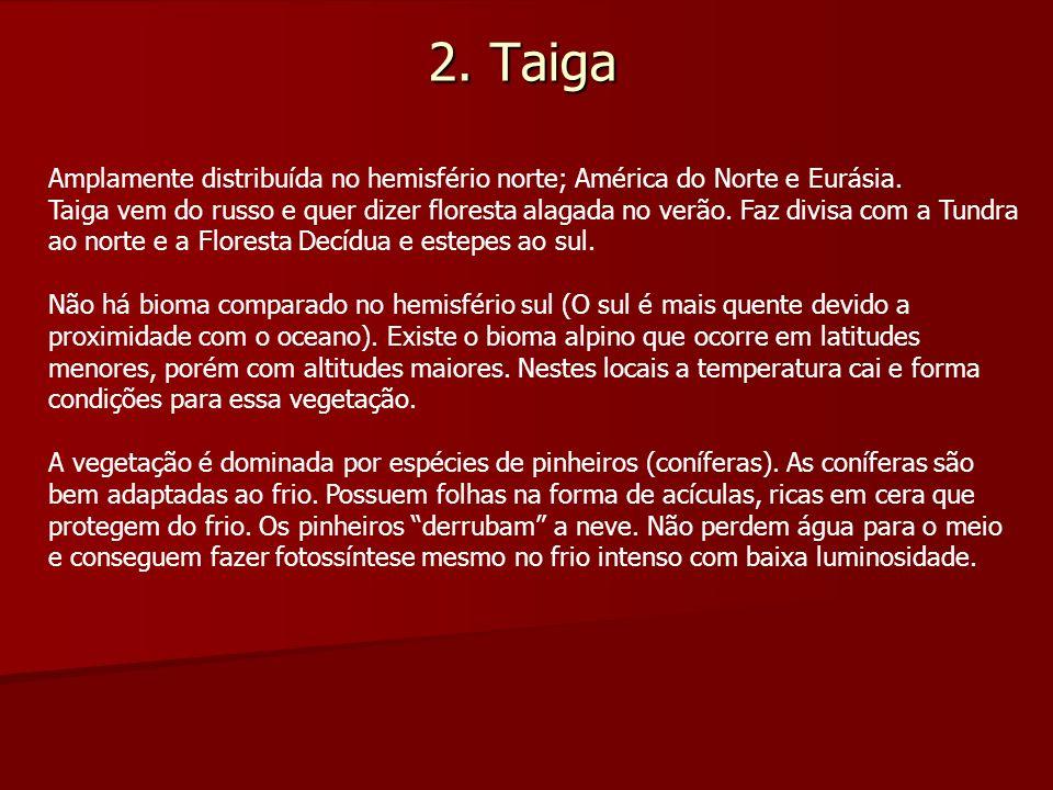 2. Taiga Amplamente distribuída no hemisfério norte; América do Norte e Eurásia. Taiga vem do russo e quer dizer floresta alagada no verão. Faz divisa