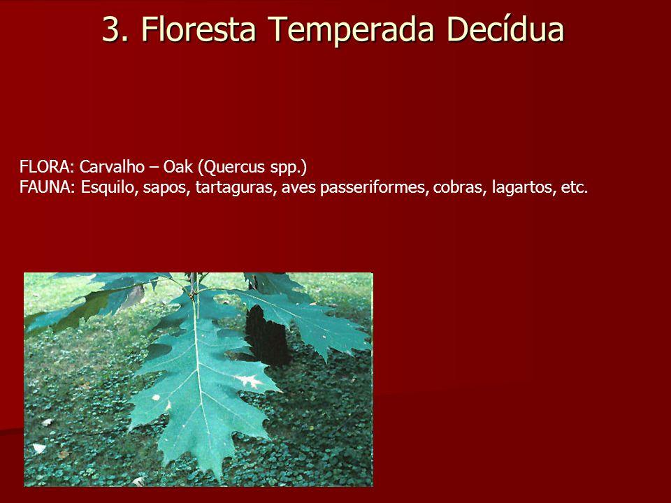 3. Floresta Temperada Decídua FLORA: Carvalho – Oak (Quercus spp.) FAUNA: Esquilo, sapos, tartaguras, aves passeriformes, cobras, lagartos, etc.