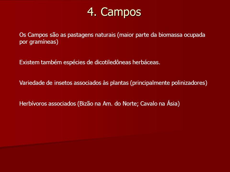4. Campos Os Campos são as pastagens naturais (maior parte da biomassa ocupada por gramíneas) Existem também espécies de dicotiledôneas herbáceas. Var